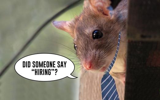 Rat Race_Post Featured Banner